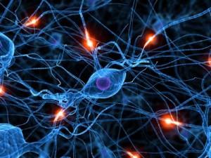 cerveau signaux